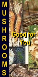 Ormus Minerals --Ormus Rich Mushrooms good for you